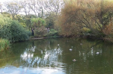Newford Duck Pond