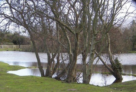 Pwll William Pond, Nefyn