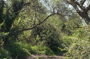 The riverside path throught the Orchard.