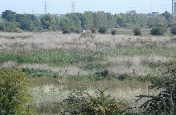 Crossness Southern Marsh (formerly Erith Marshes)