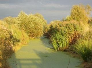 Water Vole territory - Greylake RSPB