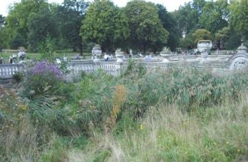 Reedbed near the Italian Gardens