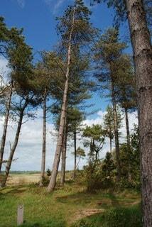 Summer view of Newborough woods. Malltraeth estuary in the background.