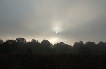 A misty start to the day the Chimney Swift was found further up the River Ouse...