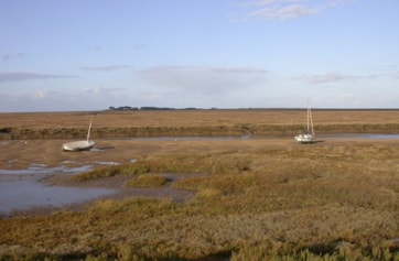 Saltmarsh east of Wells in autumn sunshine; a newly arrived female Brambling was in bushes very near here.