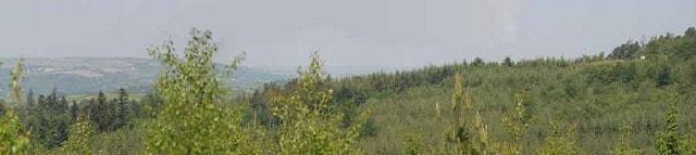Raptor viewpoint, Haldon Forest in spring.