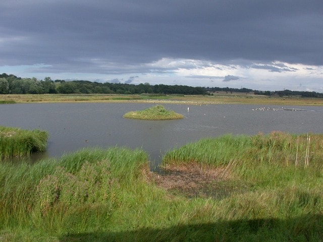 View from the hide - there's a Wood Sandpiper out there somewhere!