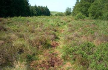 The bog. Large Heaths ssp <i>polydama</i> abundant.