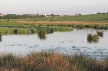 View of Gartloch Pools, south of Gartloch Road.
