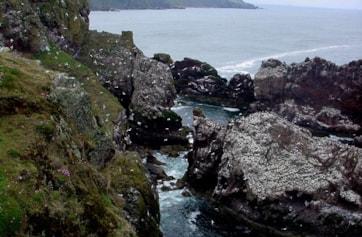 Stacks where the seabirds nest