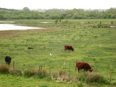 Lagoon 1 with Cattle Egret in the foreground.