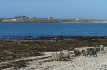 A view across Nouster Bay with the North Ronaldsay Bird Observatory and guest house in the background.