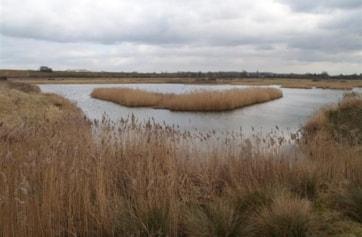Reedbed Lake.