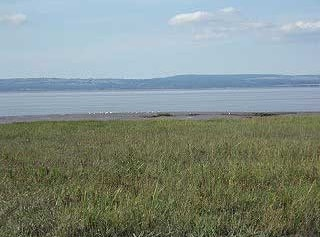 View towards Bristol Channel from Portbury Wharf Nature Reserve