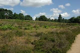 Some of the area being returned to heathland