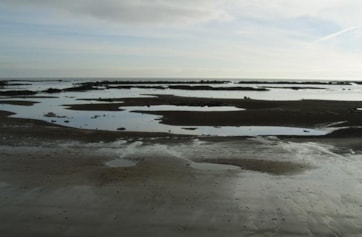 The 'harbour' at South Bents, Whitburn. The 'steels' are the rocky wave cut platforms, of which Whitburn has several, all good places for spotting waders and sea birds.