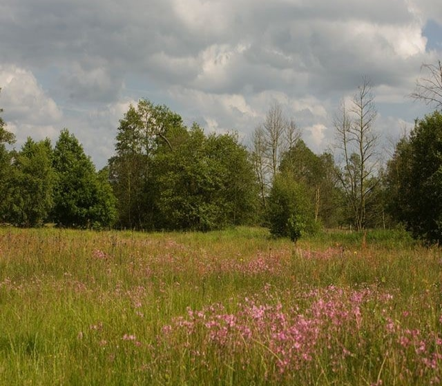 The meadow in flower at Aqualate.