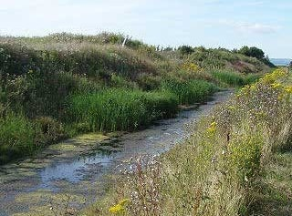 View from path to Bristol Channel sea wall at Portbury Wharf Nature Reserve