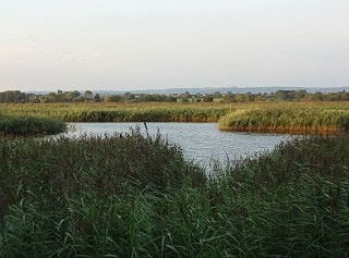 View from Meare hide