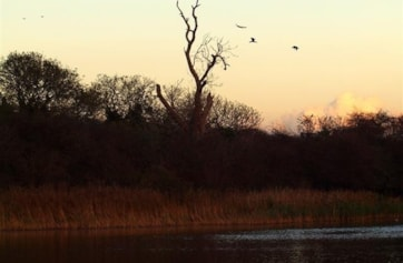 View looking north across Welton Water's large lake. The large tree is a favourite perch for Cormorants.