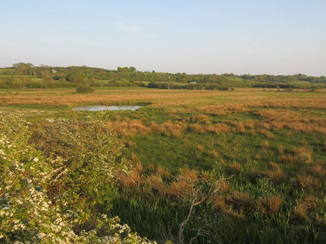 A sunny May evening at Malltraeth Marsh.