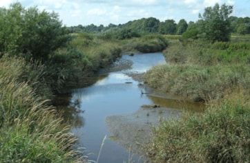 The creek to the east of Carr Bed on the River Eden, a short distance upstream of Rockcliffe.