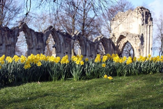St Mary's Abbey in the Museum Gardens in Central York.