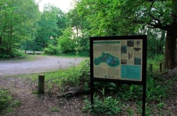 Ruislip Woods NNR. A beautiful ancient woodland.