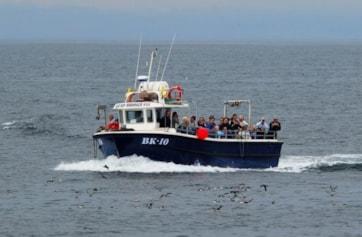 Boat arriving at Inner Farne