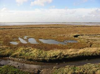 Saltmarsh viewed from hide.