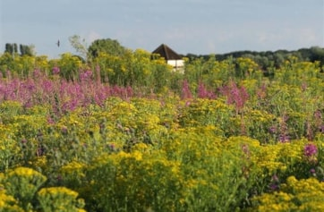 View of the turret hide through a July 2009 field of wild flowers.