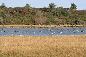 View from Middlebere hide across channel to Arne