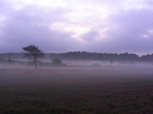 Evening mist rising over Thursley Common, from Shrike Hill.