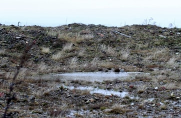 Dunlin Pond and the mounds, Snow Bunting country.