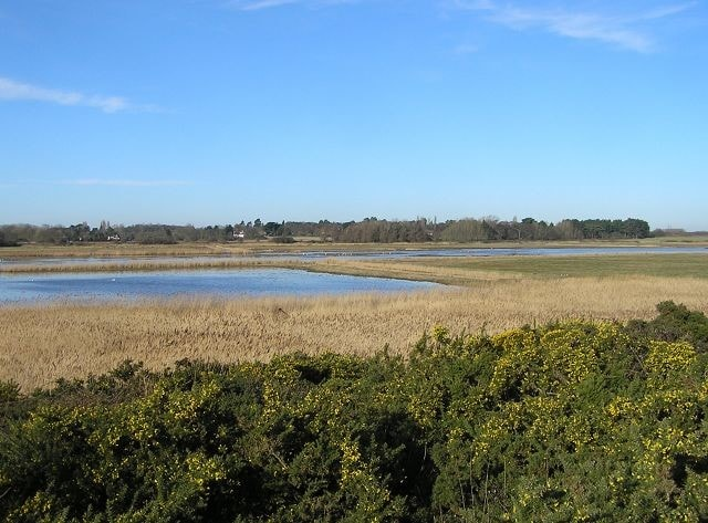 North Warren marshes in winter.