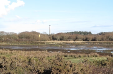 The pool at Stansore Point, Lepe, which hosted the Lesser Yellowlegs in January 2014.