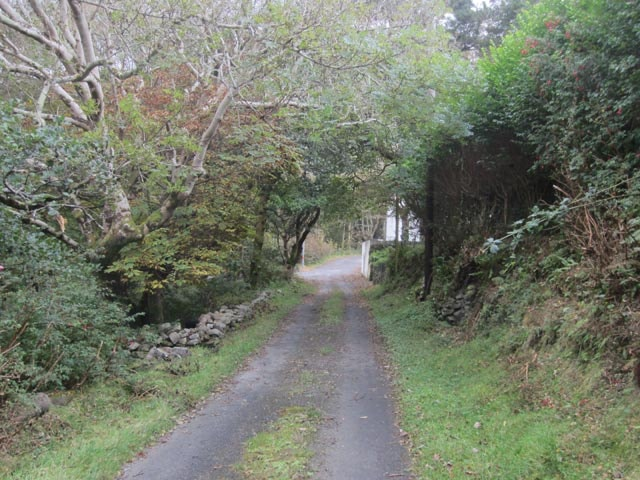 The wooded valley at Doogort is easily explored via the small lanes which intertwine through its interior; how long before a Nearctic passerine is discovered here?