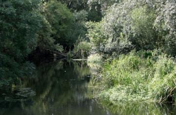 Beeleigh Falls, Heybridge, Maldon