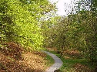 Strid Woods
