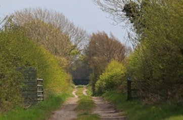 The Spring-like feel of the lonning invites one to venture along it onto the wetland part of the Reserve. Today, the air was full of birds singing. Willow Warblers and Chiffchaff have already arrived.