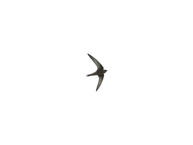 Plain Swift